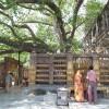 ブッダガヤでは仏教の東南アジア一周が出来る?!やはり一番は日本だな!