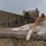 猫とカモメとお魚と。カサブランカ→エッサウィラ移動はバスにてGo!